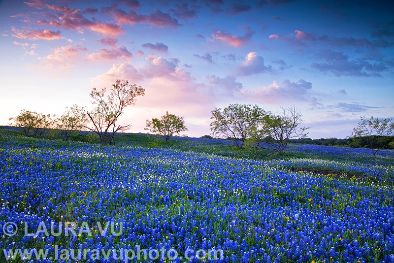 Texas wildflowers photo in Palmer, Texas