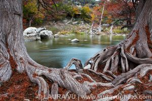 Hint of Fall - Guadalupe River State Park, Texas