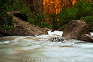 Nature Flow - Zion National Park, Utah